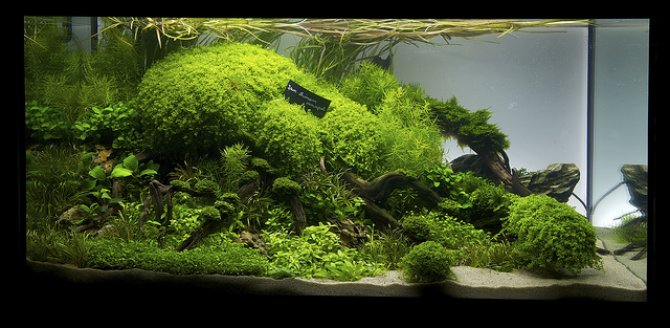 UK represented in live international aquascaping contest ...