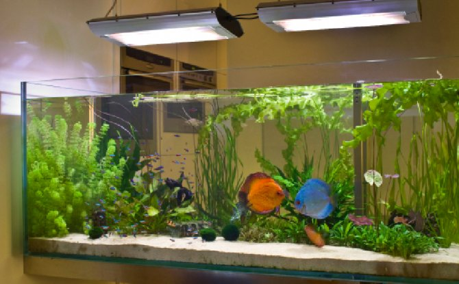 Inspirational Aquariums Discus The Centrepiece