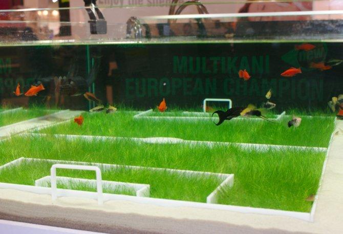 10 Of The Weirdest Fish Tanks Practical Fishkeeping Magazine
