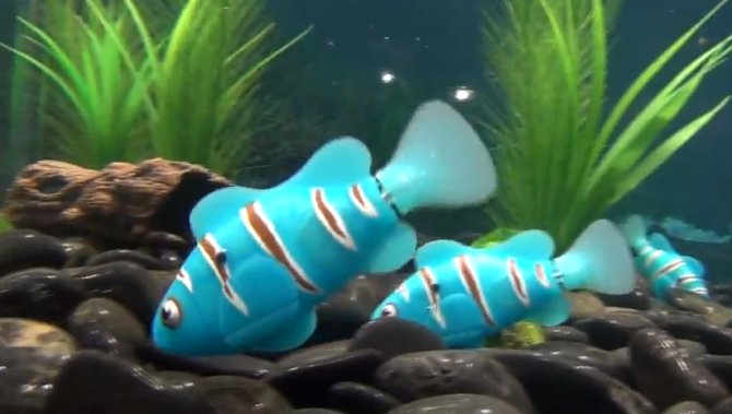 Video check out the swimming style of these robotic for Best fish to have as pets