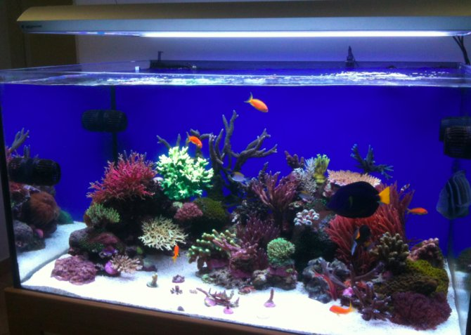 Inspirational aquariums: Prodibio reef ? Practical Fishkeeping ...