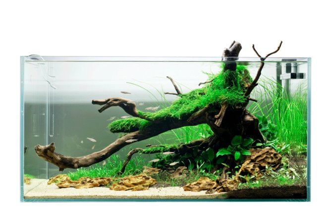 Inspirational Aquariums: Darren Daltonu0027s Temperate Aquascape U2014 Practical  Fishkeeping Magazine