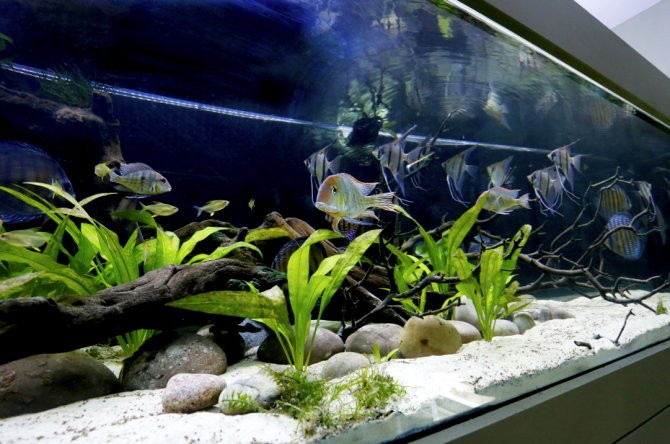 Aquatronica Aquarium Automation System Aquascape Cheap Sales 50% Other Fish & Aquarium Supplies Pet Supplies