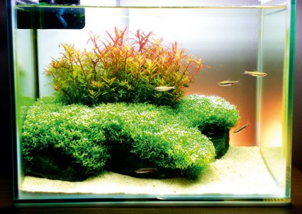 readers tanks practical fishkeeping magazine