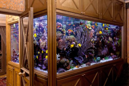 10 Outstanding Aquariums Practical Fishkeeping Magazine