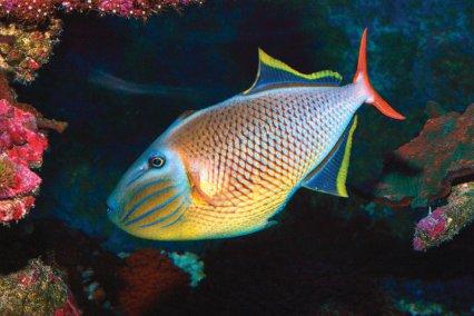 Your Tanks Mark Howarth Practical Fishkeeping Magazine