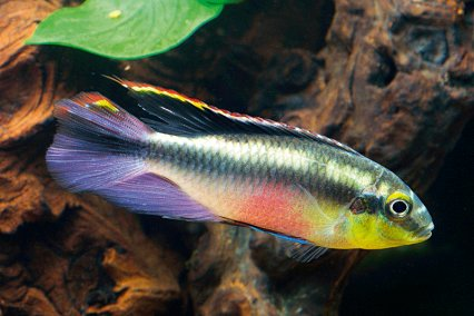 The 10 most under rated community fish practical for Good community fish