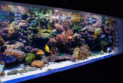 Are self cleaning fish tanks still fiction practical for Self sustaining fish tank