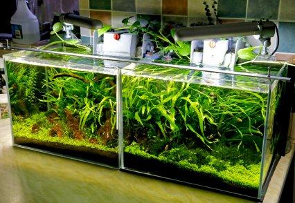 Iain's freshwater shrimp set-ups.