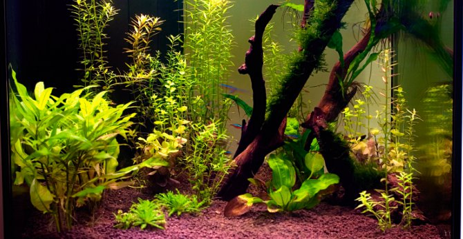 Why does my low-light planted tank suffer from algae? u2014 Practical Fishkeeping Magazine & Why does my low-light planted tank suffer from algae? u2014 Practical ... azcodes.com