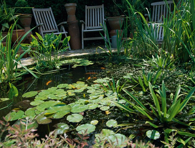 How to avoid summer pond problems practical fishkeeping for Pond problems