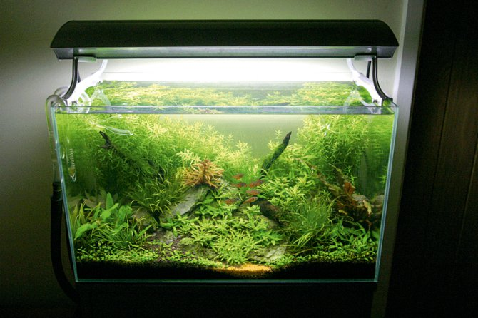 Algae prevention in your planted tank practical for Algae bloom in fish tank