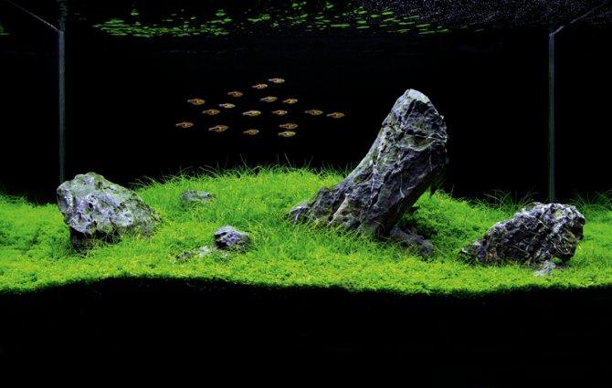 How to set up an iwagumi aquarium practical fishkeeping for Freshwater schooling fish
