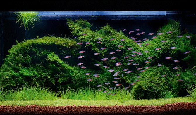 How To Grow Your Own Moss Carpet Practical Fishkeeping