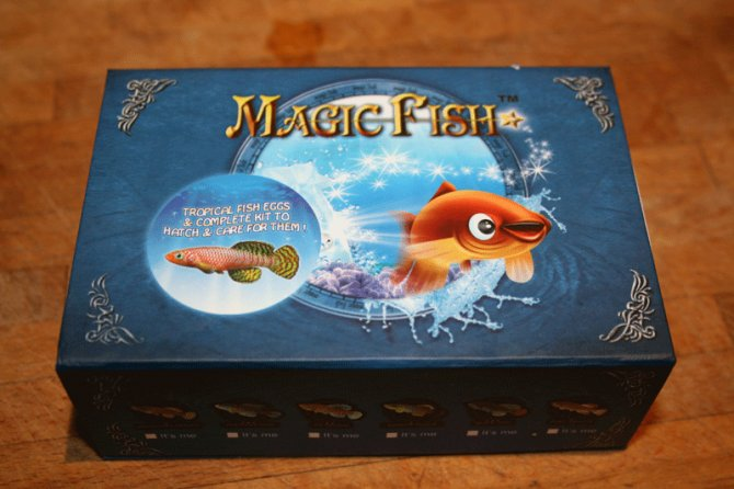 Magic fish review practical fishkeeping magazine for The magic fish