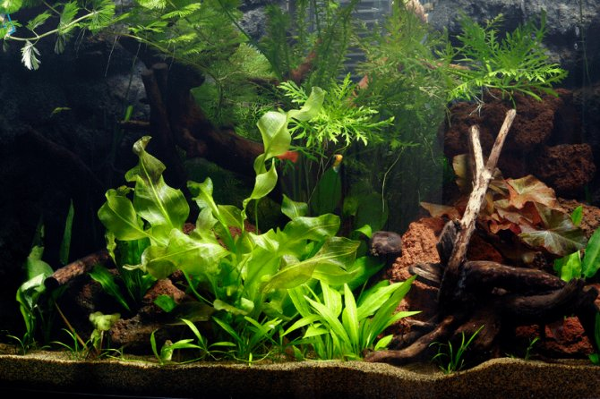 How to set up a planted tropical community aquarium for Good community fish
