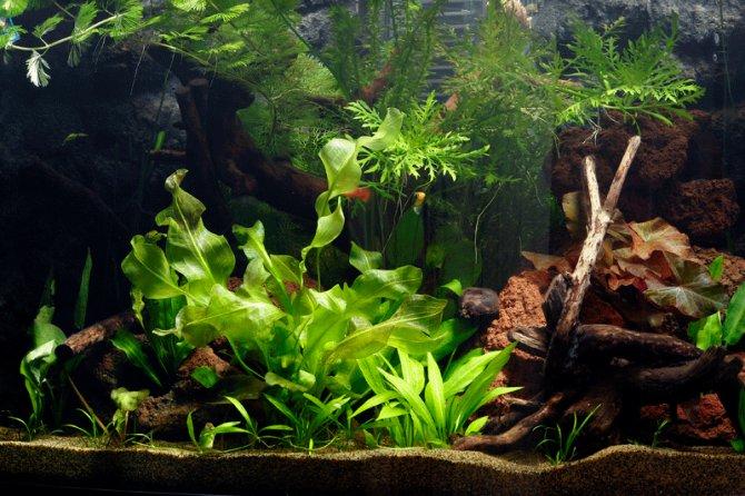 How To Set Up A Planted Tropical Community Aquarium