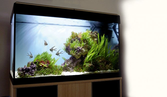 How to set up a planted marine aquarium practical for Marine fish tanks