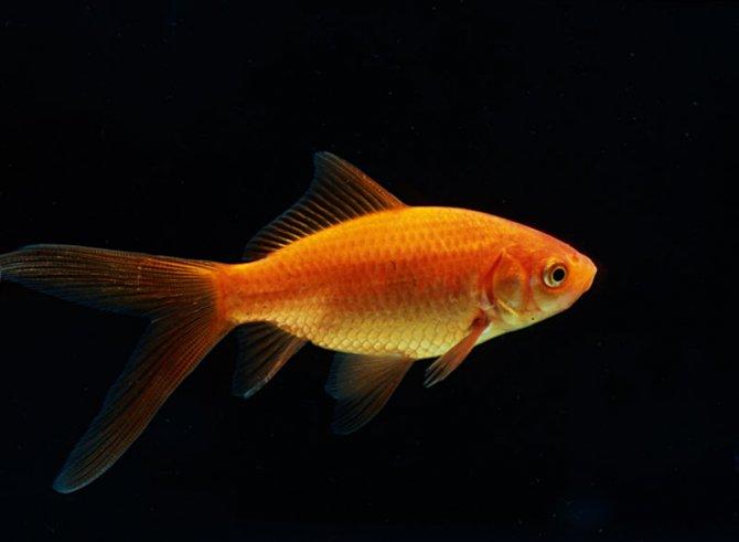 اموزش سبزه گندم تنگ ماهی Wallpaper Animals والپیپر حیوانات
