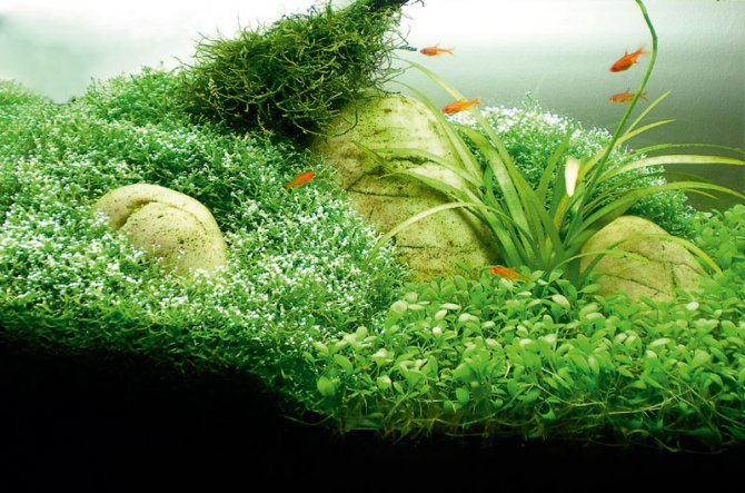 How to aquascape small tanks — Practical Fishkeeping Magazine