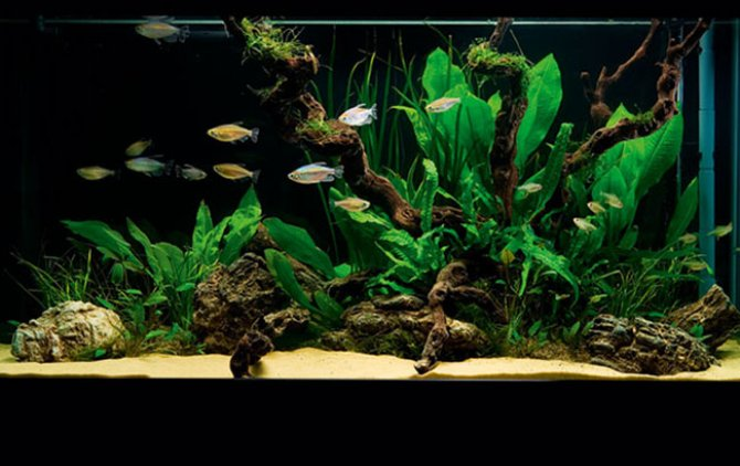 How to set up a simple but stunning planted tank for Planted tank fish