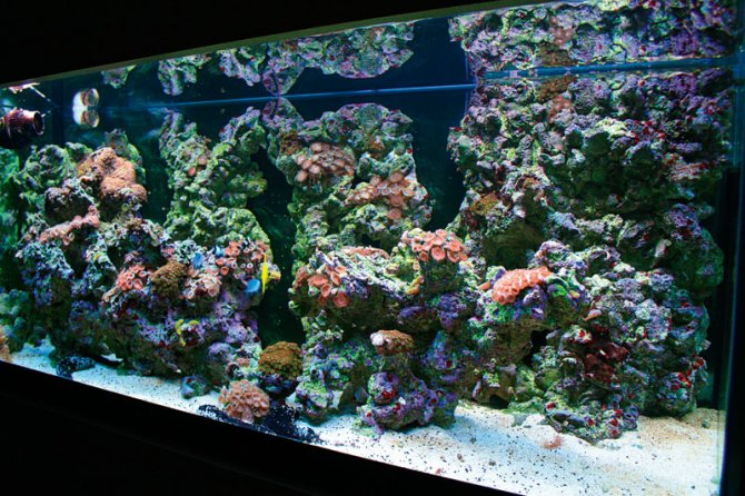 How to make your own live rock practical fishkeeping for How to make saltwater for fish