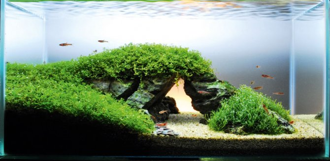 Superieur How To Re Create A Famous Landmark In Your Aquarium! U2014 Practical  Fishkeeping Magazine