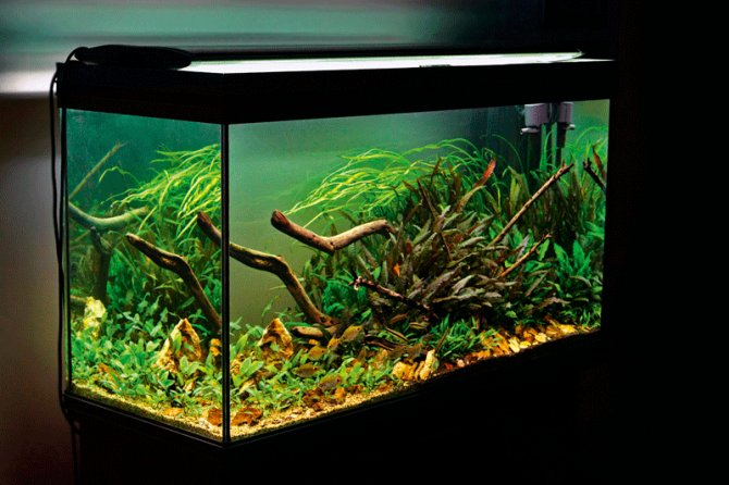 carbon in the planted aquarium gas vs liquid practical fishkeeping magazine. Black Bedroom Furniture Sets. Home Design Ideas