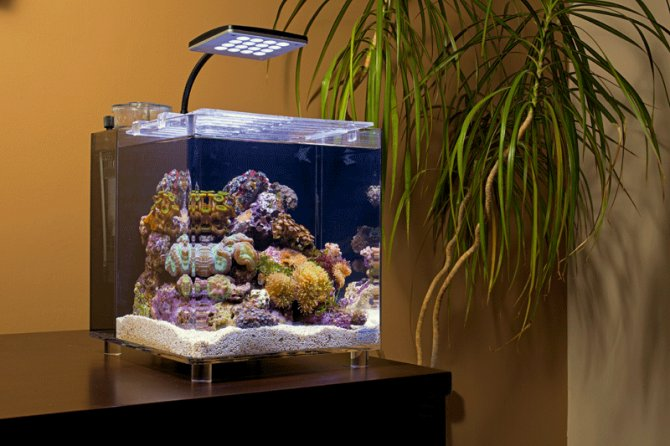 How To Set Up A TMC MicroHabitat 15 Marine Nano Aquarium