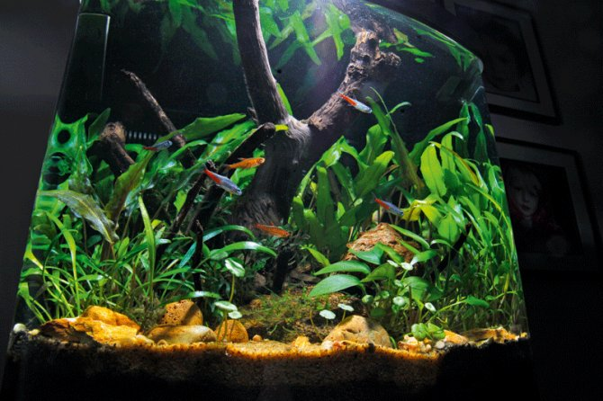 10 planted tank myths practical fishkeeping magazine for Well water for fish tank