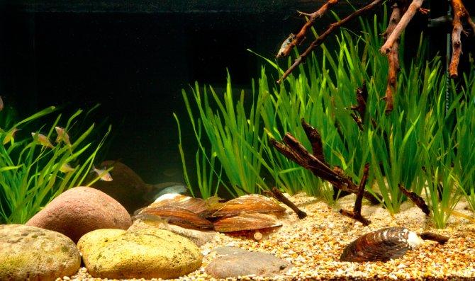 How To Set Up A Taiwanese Biotope Aquarium Practical Fishkeeping