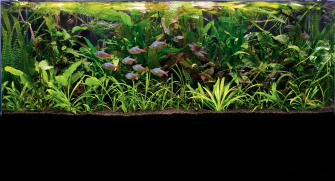 How to set up an underwater jungle aquarium ? Practical Fishkeeping ...