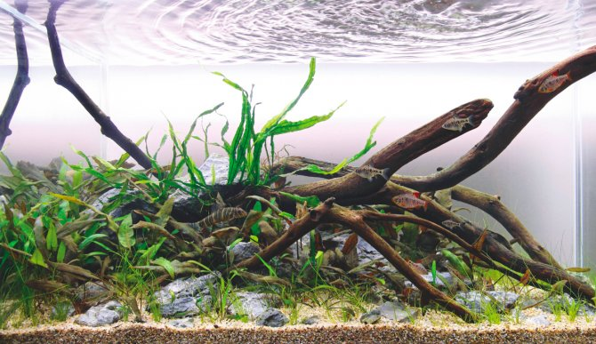 How To Set Up An Asian Aquarium On A Budget Practical Fishkeeping