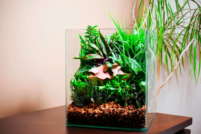 21 plants to avoid in the aquarium practical fishkeeping for Growing plants with fish