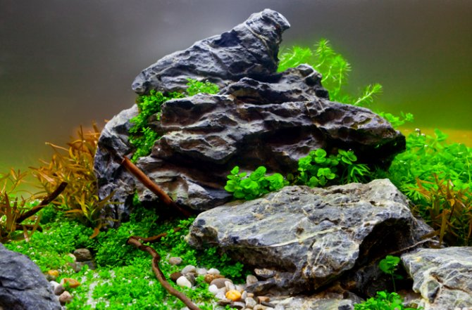 How To Get Your Aquascape Right First Time U2014 Practical Fishkeeping Magazine