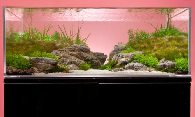 a thoroughly modern aquascape practical fishkeeping magazine
