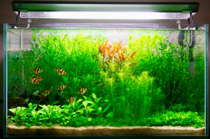 What co2 can do for you and your plants practical for Growing plants with fish