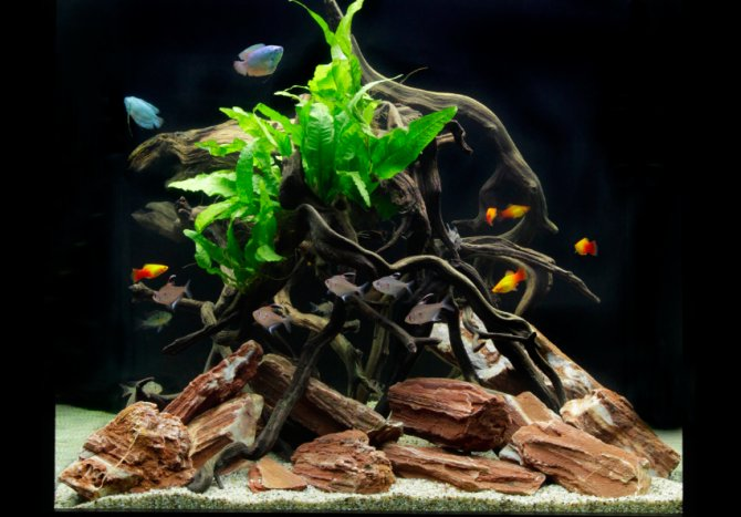 How to set up a low maintenance cube shaped aquarium for Low maintenance fish tank