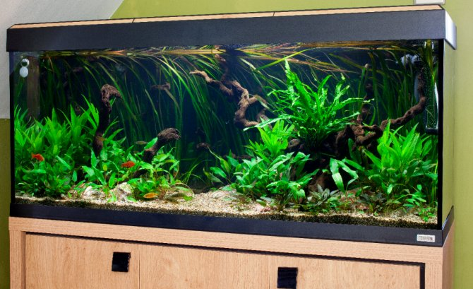 How to set up a temperate tank that looks tropical for Exotic fish tanks