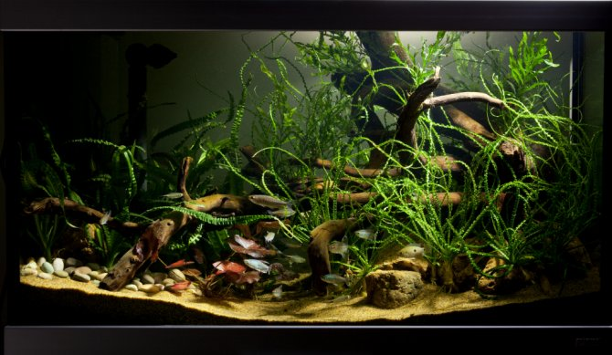 How to set up an african biotope aquarium practical for Freshwater fish tank setup