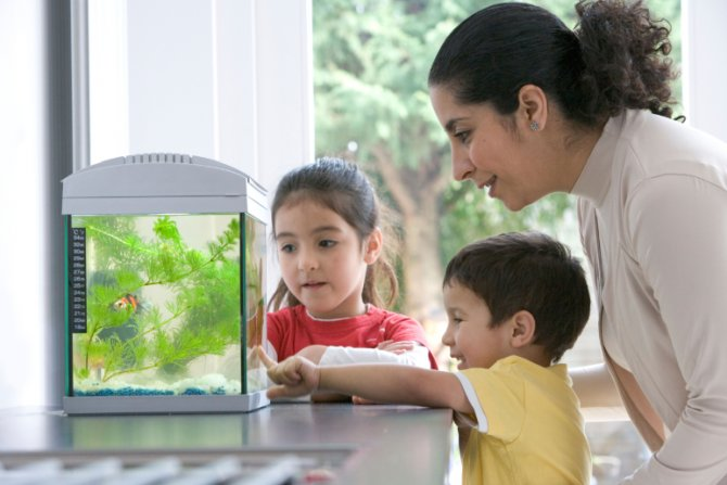 Setting up an aquarium for children practical for Fish tank for kids