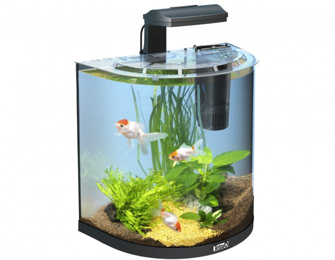 Review tetra aquaart explorer tropical tank 60 litre for Aquarium boule 20 litres