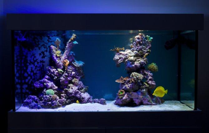 Reef Tank Evolution Practical Fishkeeping Magazine