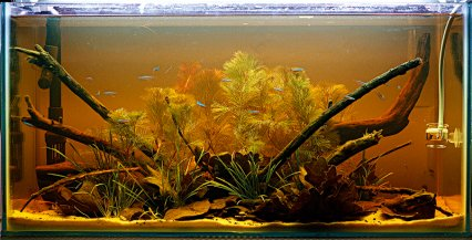 How To Set Up An Amazon Biotope With Play Sand