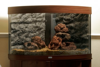 How To Set Up A Planted Tropical Community Aquarium Practical