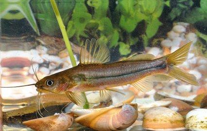 Biotopes of Goa and Karnataka, India — Practical ...