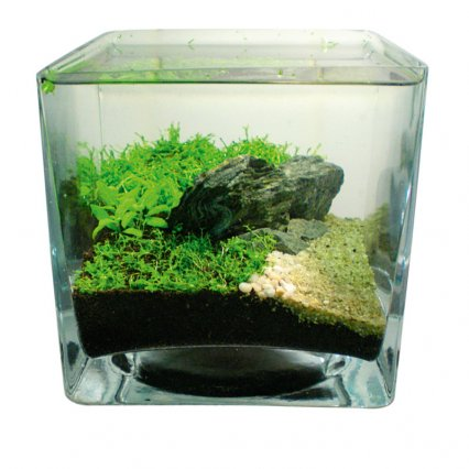 How to aquascape small tanks ? Practical Fishkeeping Magazine