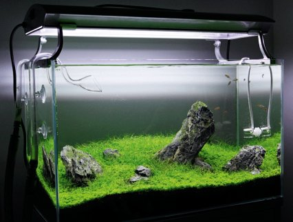carbon in the planted aquarium gas vs liquid practical. Black Bedroom Furniture Sets. Home Design Ideas