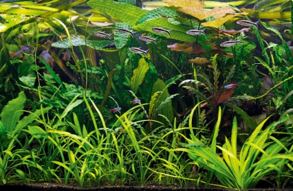 How To Set Up An Underwater Jungle Aquarium Practical Fishkeeping