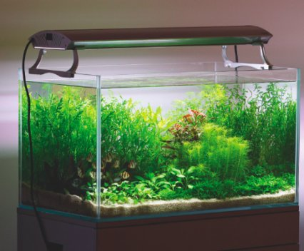 How To Set Up A Dutch Style Aquascape Practical